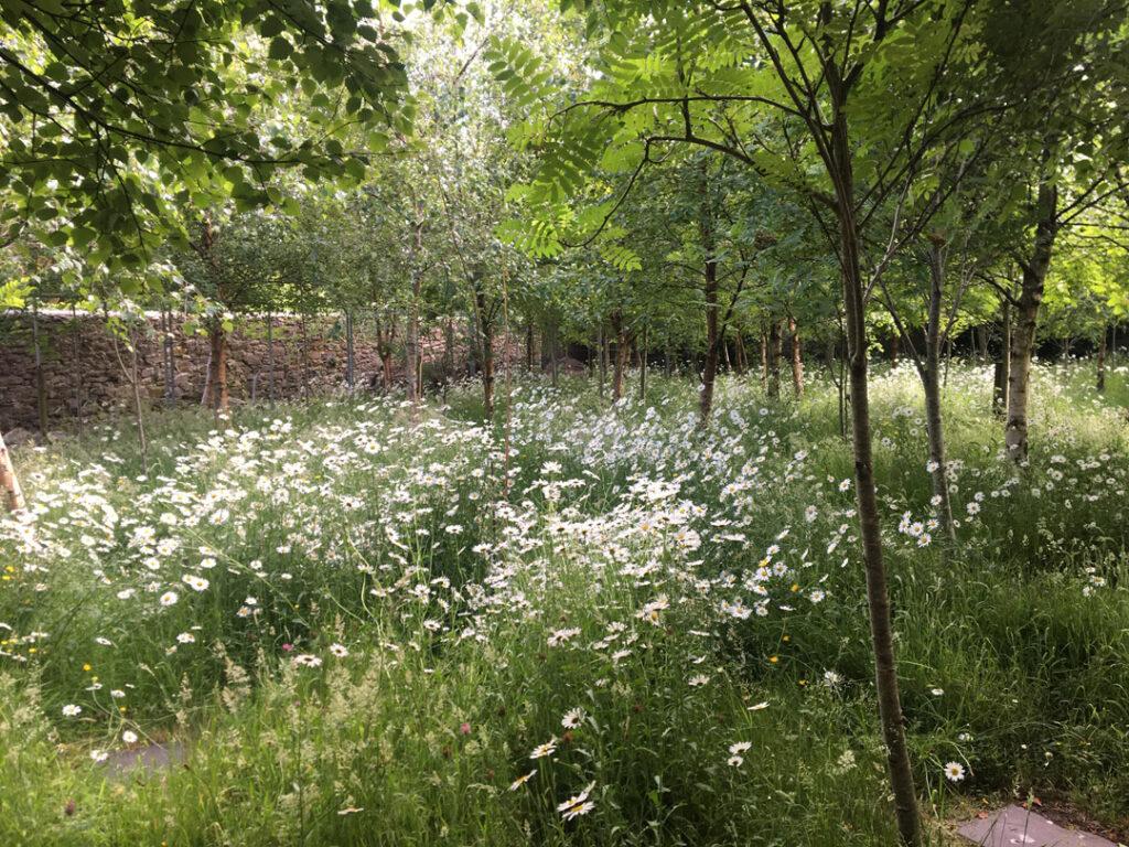 Díseart upper garden