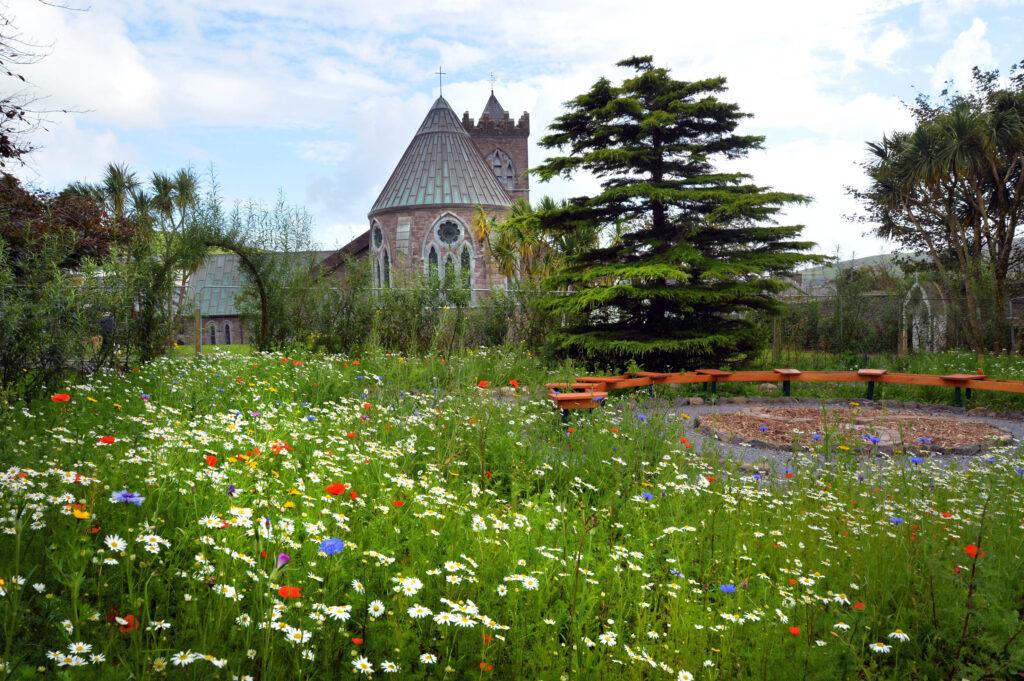 Wildflowers in Diseart garden